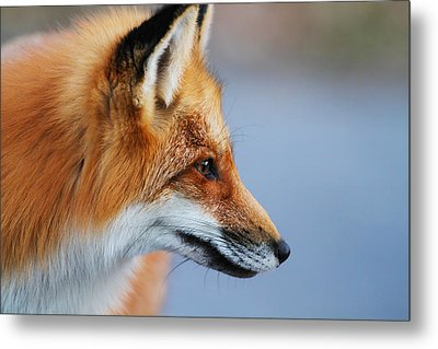 Fox Profile Metal Print by Mircea Costina Photography