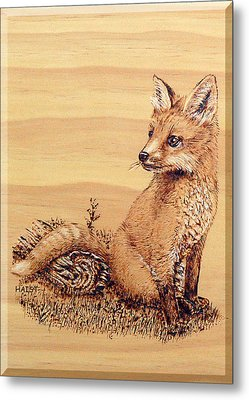 Fox Pup Metal Print by Ron Haist