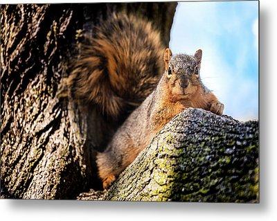 Fox Squirrel Watching Me Metal Print by Onyonet  Photo Studios