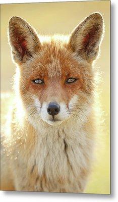 Foxy Faces Series- Serious Fox Metal Print