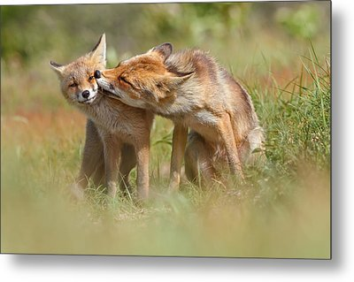 Foxy Love Series - But Mo-om II Metal Print