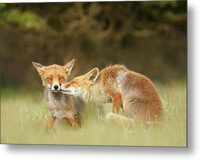 Foxy Love Series - Kiss Metal Print