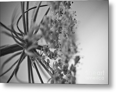 Fractal Flower Photoset 03 Metal Print by Ryan Kelly