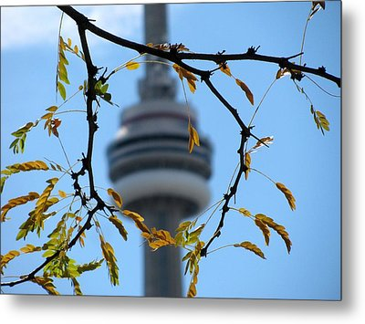Framed By Nature Metal Print by Alfred Ng