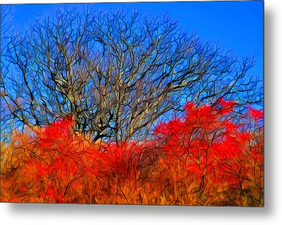 Framed In Red Metal Print by Lilia D