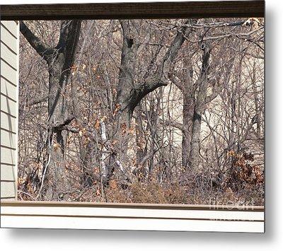 Framing Tangled Dunescape Metal Print by Ann Horn