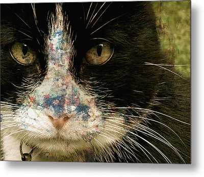 Frankie Metal Print by Paul Lovering