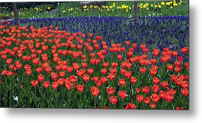 Franklin Park Conservatory Tulips 2015 Metal Print by Mindy Newman