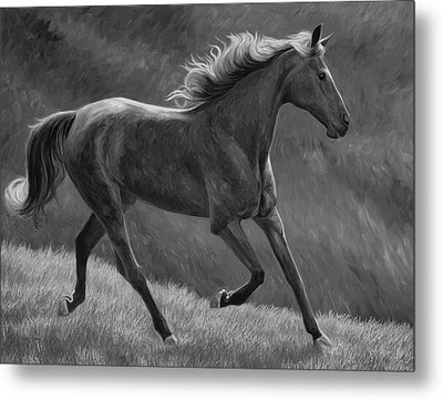 Free - Black And White Metal Print by Lucie Bilodeau