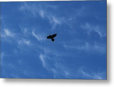 Metal Print featuring the photograph Free by Marilynne Bull