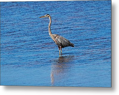 Metal Print featuring the photograph Free Spirit by Michiale Schneider