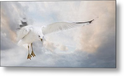 Metal Print featuring the photograph Free To Fly by Robin-lee Vieira
