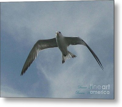 Metal Print featuring the photograph Freedom by Donna Brown
