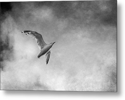 Freedom In Black And White Metal Print by Maggie Terlecki
