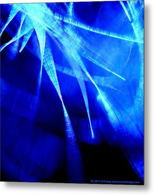 Freedom Spirit Metal Print by JCYoung MacroXscape