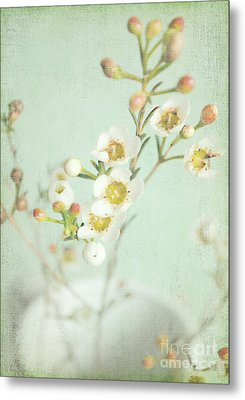 Freesia Blossom Metal Print by Lyn Randle