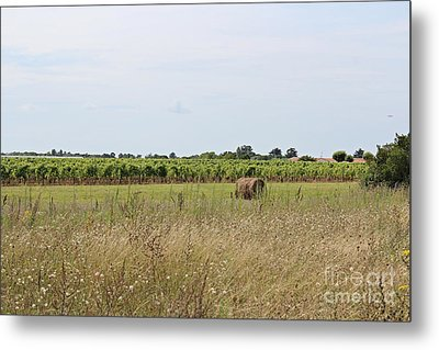 French Countryside Metal Print by Cendrine Marrouat