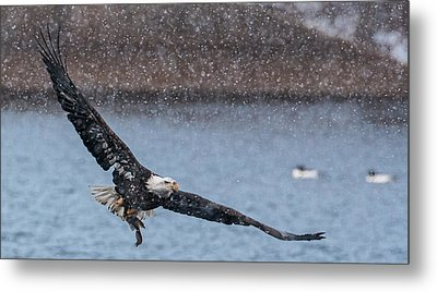 Metal Print featuring the photograph Fresh Catch by Kelly Marquardt