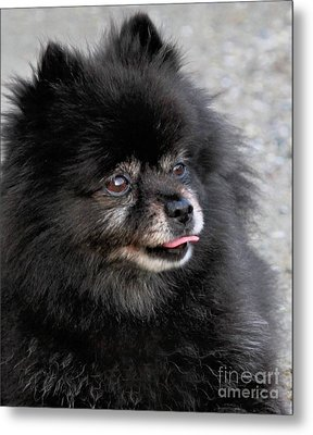 Metal Print featuring the photograph Fresh Dog by Debbie Stahre