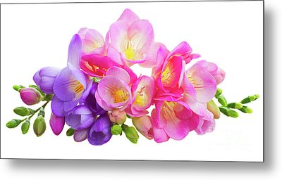 Fresh Pink And Violet Freesia Flowers Metal Print
