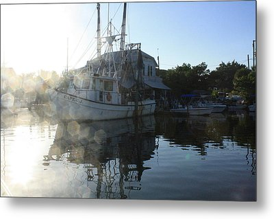 Fresh Shrimp Today Metal Print by Tara Moorman Photography
