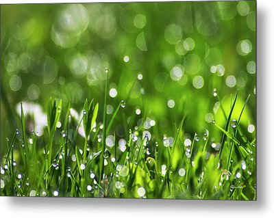 Fresh Spring Morning Dew Metal Print by Christina Rollo