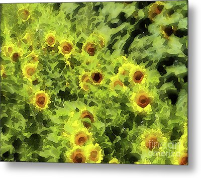 Fresh Sunflowers Metal Print by Methune Hively