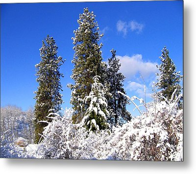 Metal Print featuring the photograph Fresh Winter Solitude by Will Borden