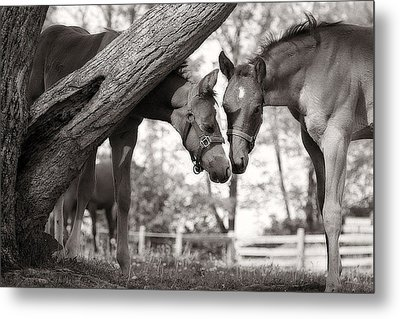 Friends - Black And White Metal Print by Angela Rath