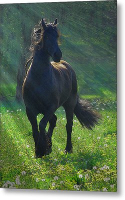 Friesian Sun Metal Print