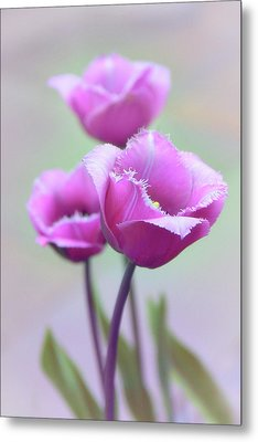 Metal Print featuring the photograph Fringe Tulips by Jessica Jenney