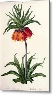 Fritillaria Imperialis Metal Print by Pierre Joseph Redoute