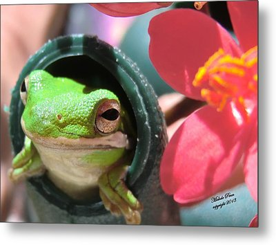 Frog At Selby Metal Print by Michele Penn