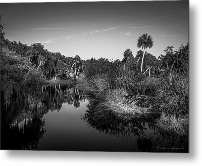 Frog Creek 2 Metal Print by Marvin Spates