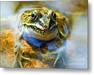 Frog In Pond Metal Print
