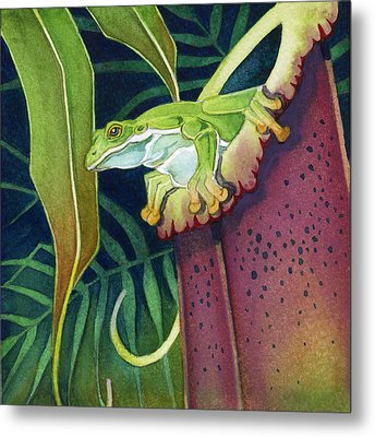 Frog In Tropical Pitcher Metal Print