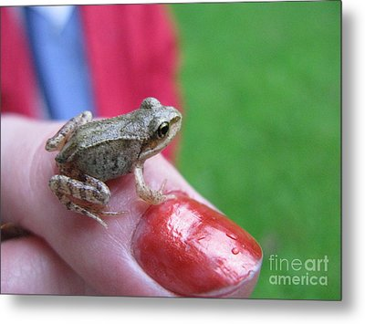 Metal Print featuring the photograph Frog The Prince by Ausra Huntington nee Paulauskaite