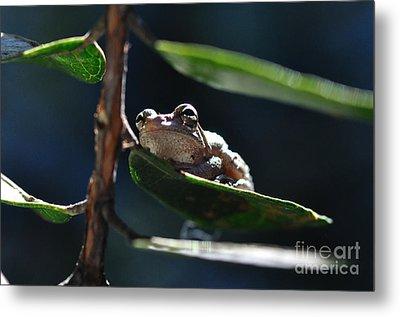 Frog With Twinkle In Eye Metal Print by Wayne Nielsen