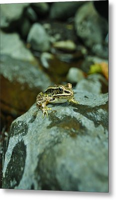 Froggy Metal Print by Brynn Ditsche