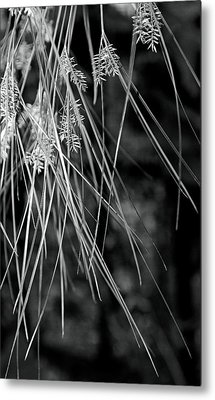 From Above Metal Print by Fraser Davidson