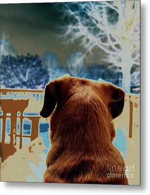 From Her Perspective   Metal Print by Steven Digman