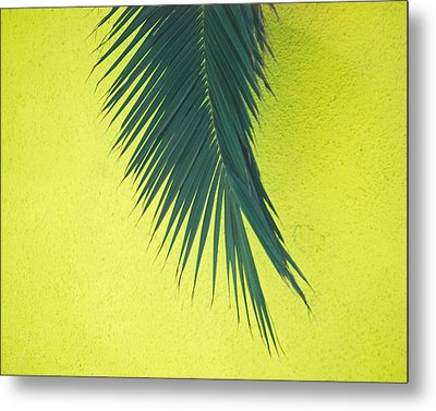 Metal Print featuring the photograph Frond by Maggy Marsh