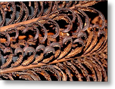 Metal Print featuring the photograph Fronds  by Diane Merkle