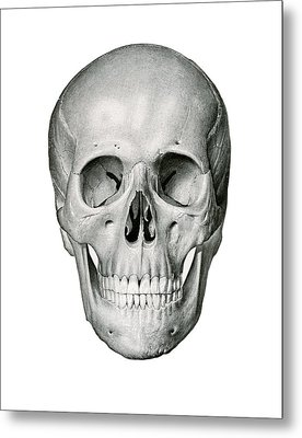 Frontal View Of Human Skull Metal Print by German School