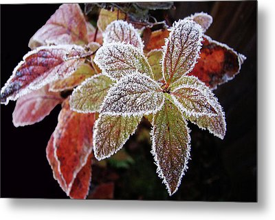 Frost Cluster Metal Print by Betsy Zimmerli