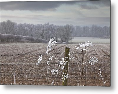 Frost-covered Rural Field Cumbria Metal Print by John Short