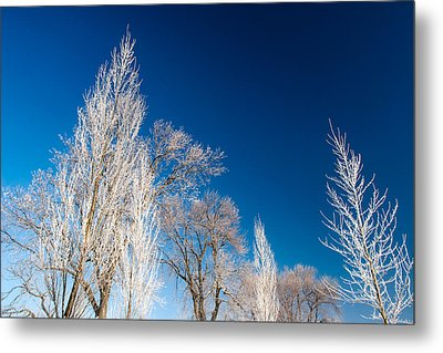 Frost Covered Trees Metal Print