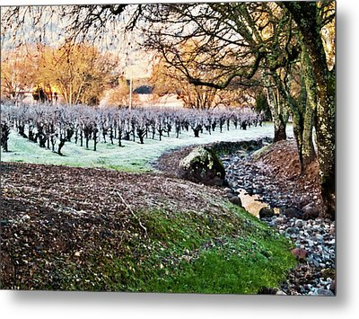 Frost In The Valley Metal Print