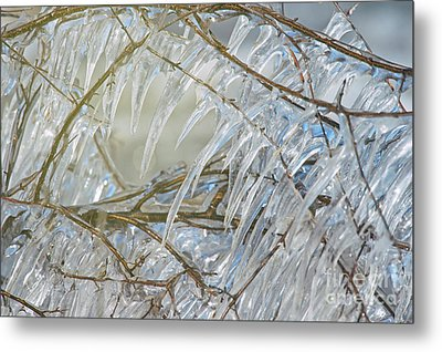 Metal Print featuring the photograph Frostbite.. by Nina Stavlund