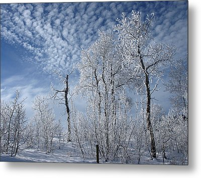 Frosted Hilltop Quakies Metal Print by DeeLon Merritt
